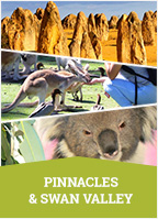 Pinnacles & Swan Valley Day Tour